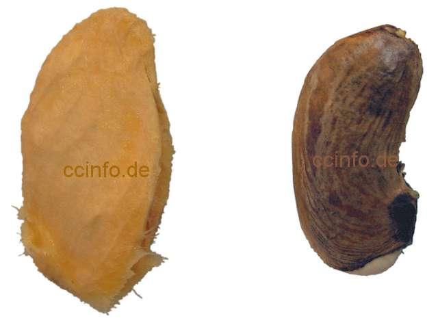 orangenbaum schneiden in spanien