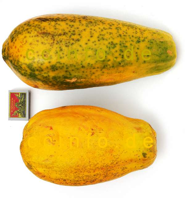 Papaya Carica Papaya Anzucht Pflege Und Kultur